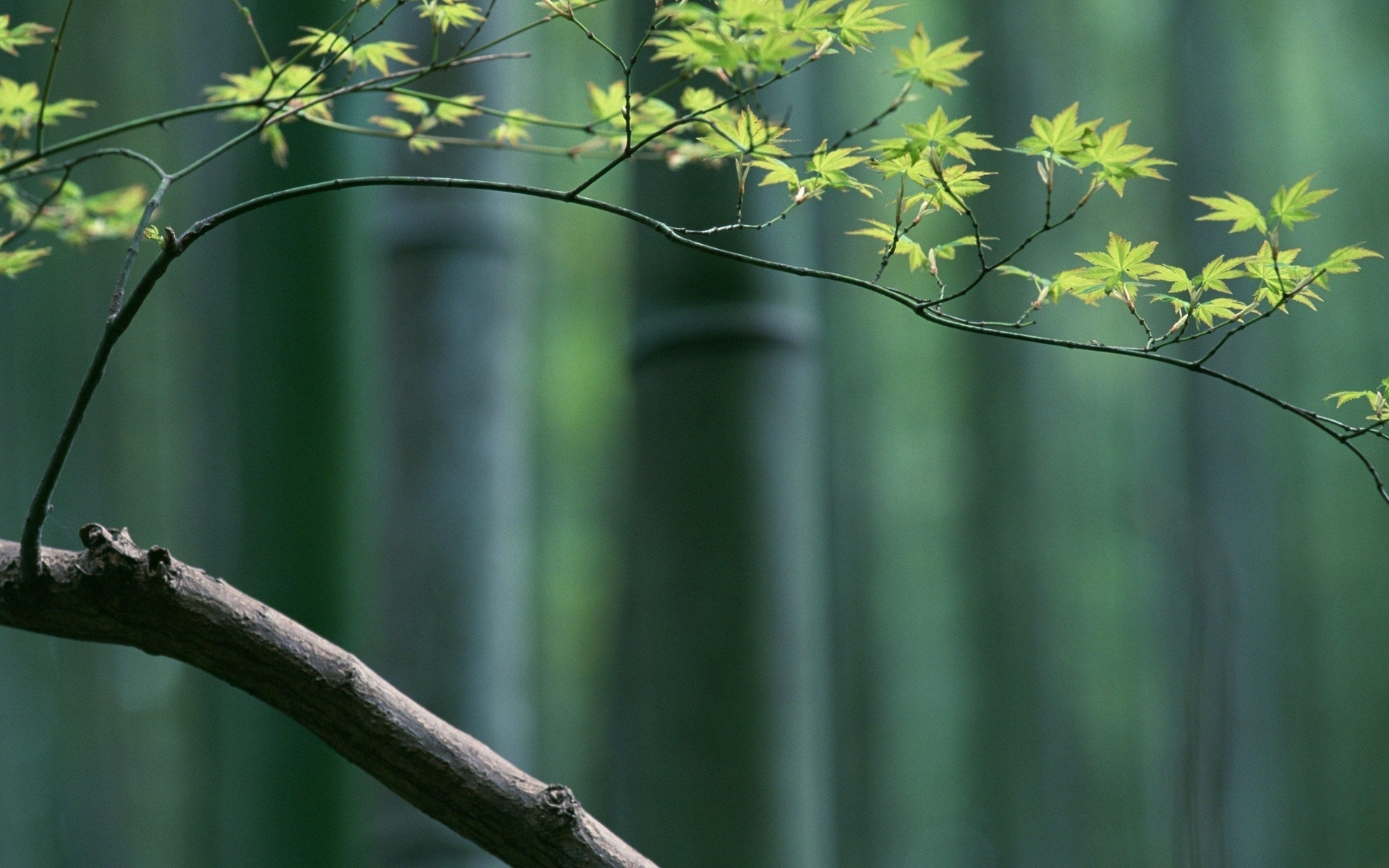 HD Wallpaper | Background ID:315693. 1920x1200 Earth Bamboo