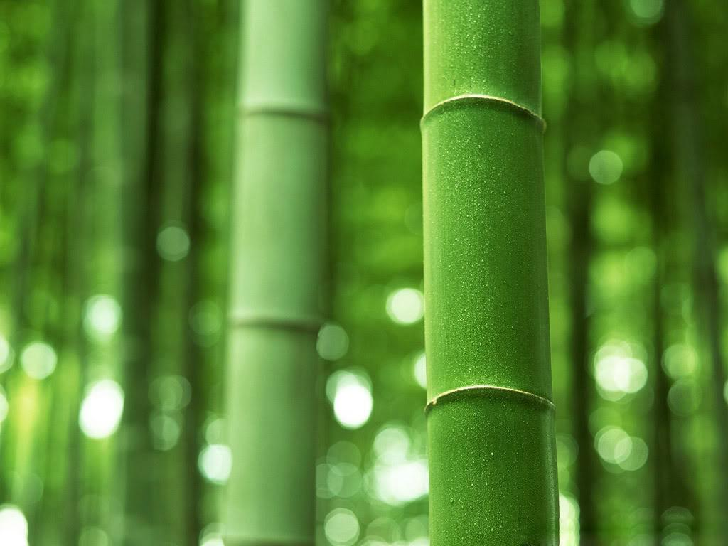 ... Bamboo Wallpaper; Bamboo Wallpaper