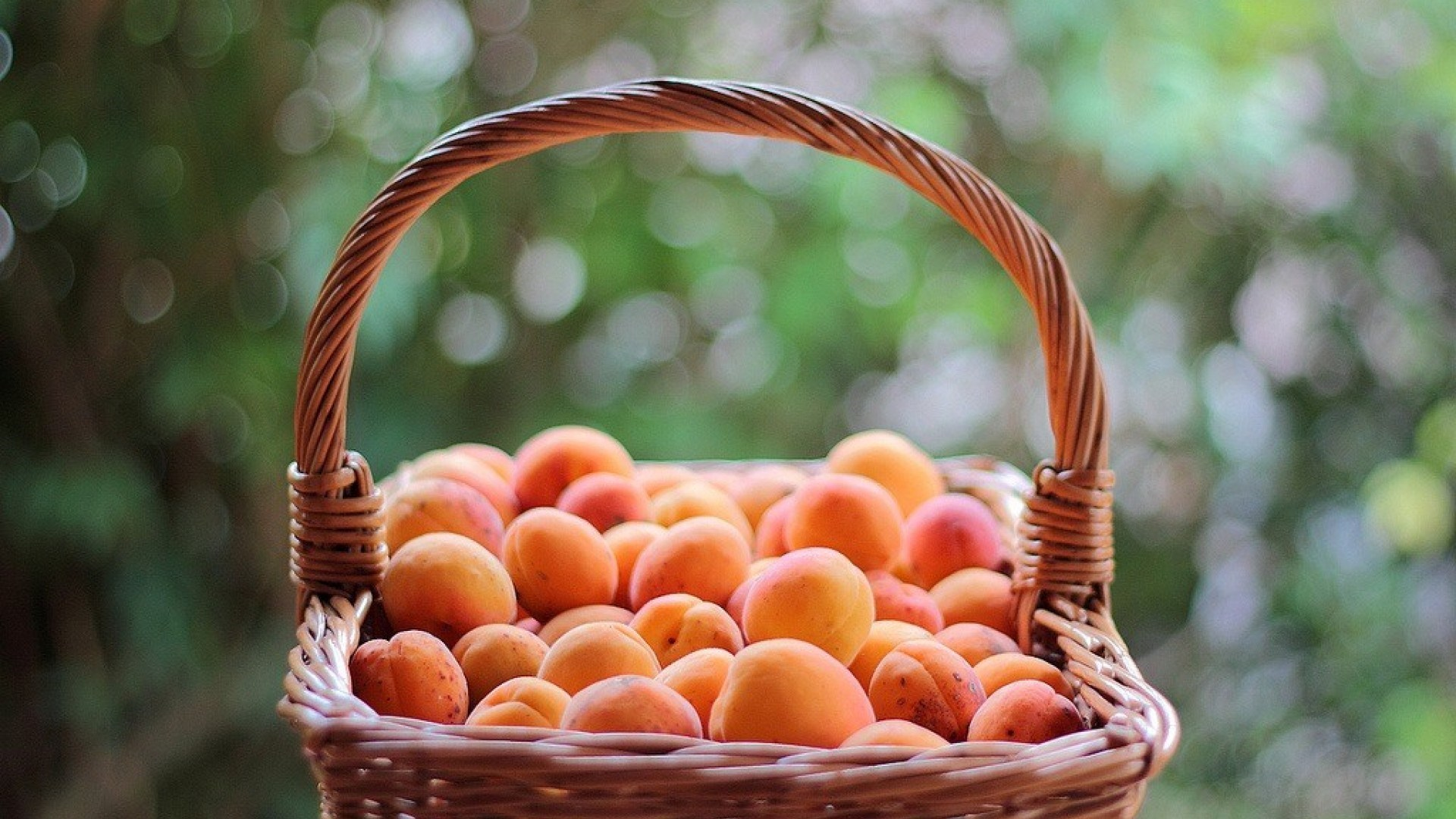 Basket Apricots