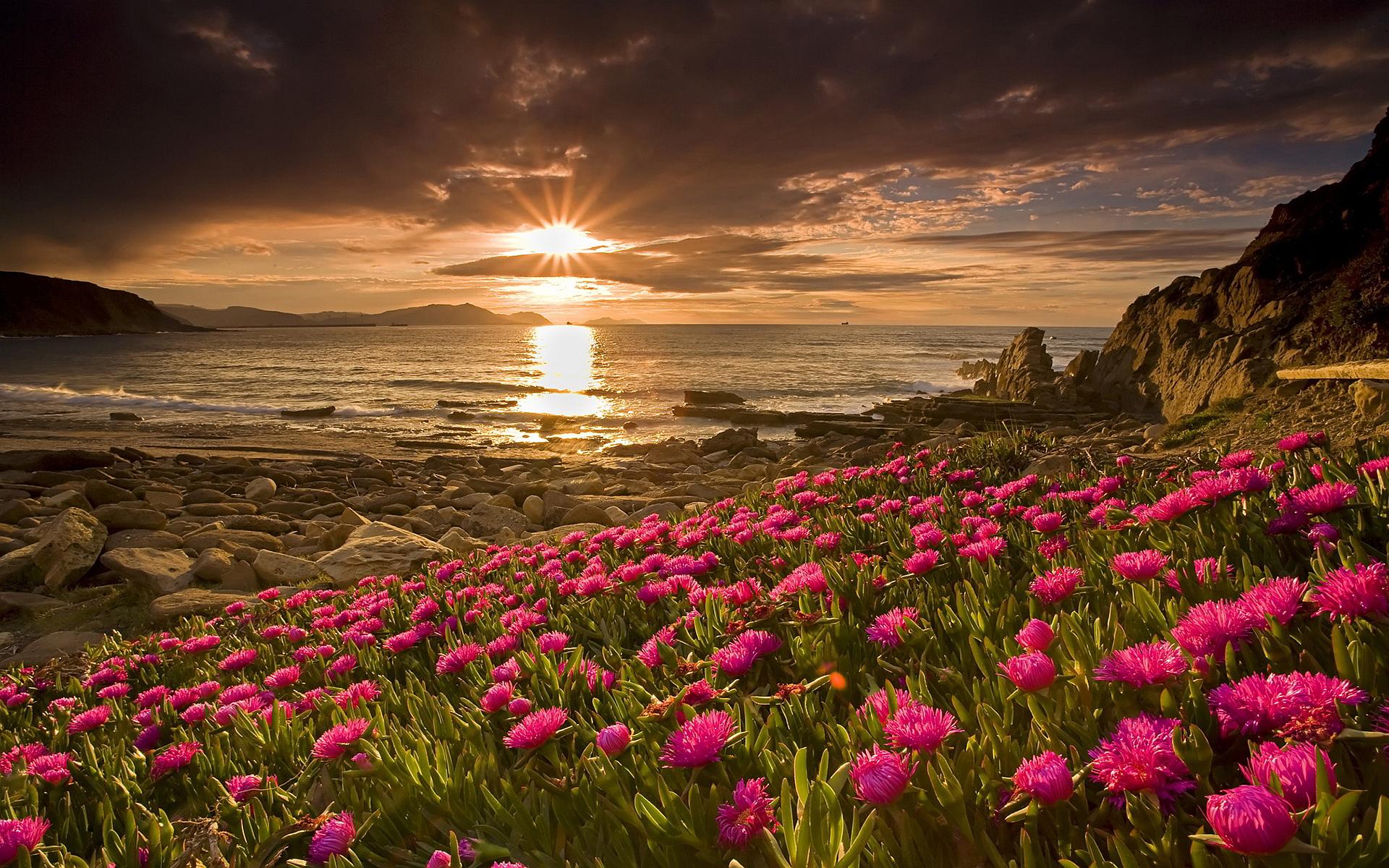 Beach flowers sunset