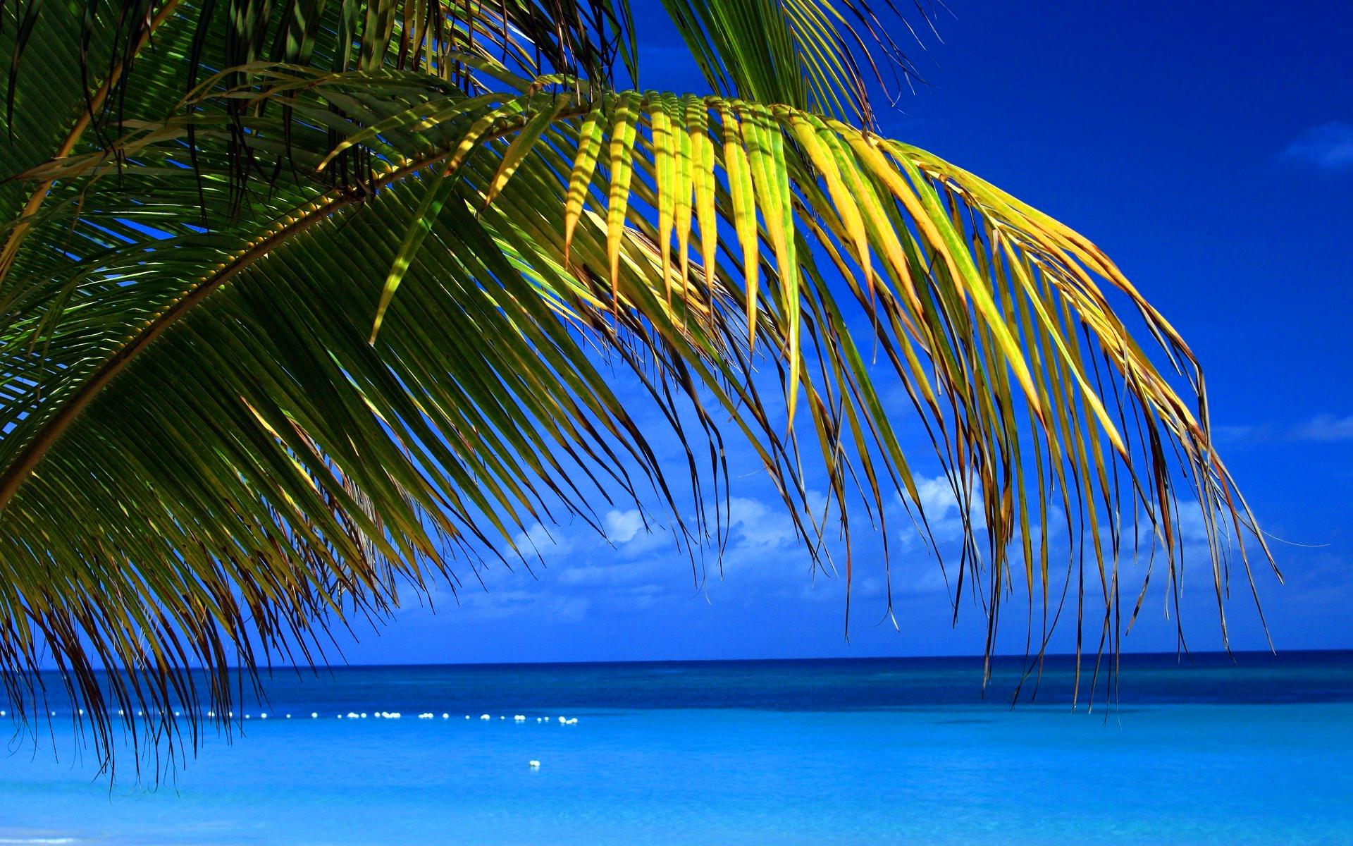 Beach palms blue sea