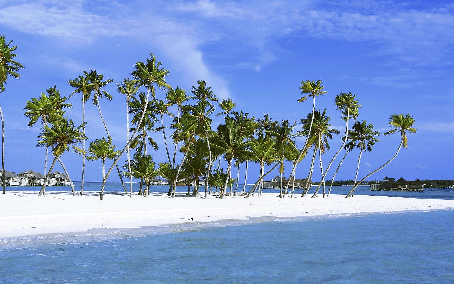 Beach Palms Maldives