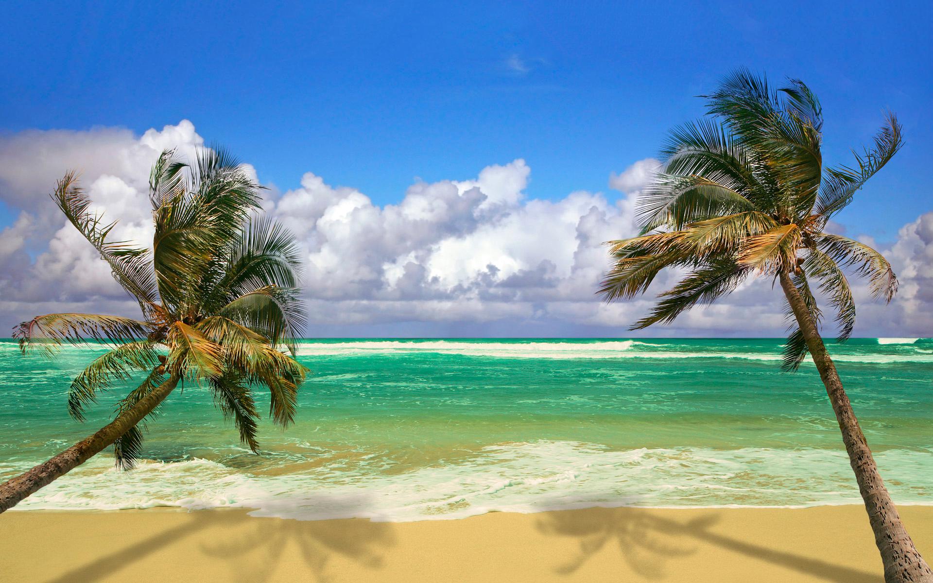 Beach Palms Ocean