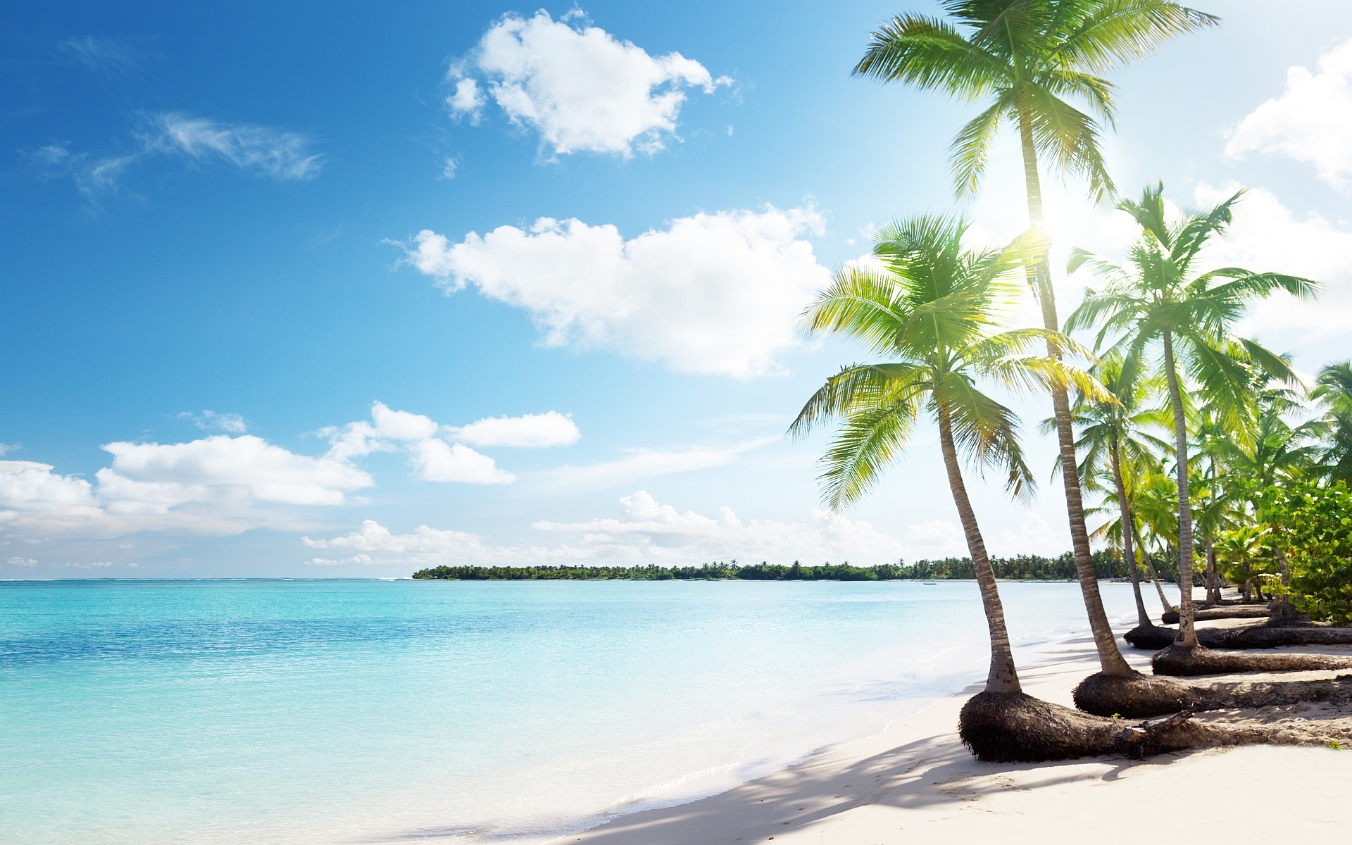 Tropical sand beach palms