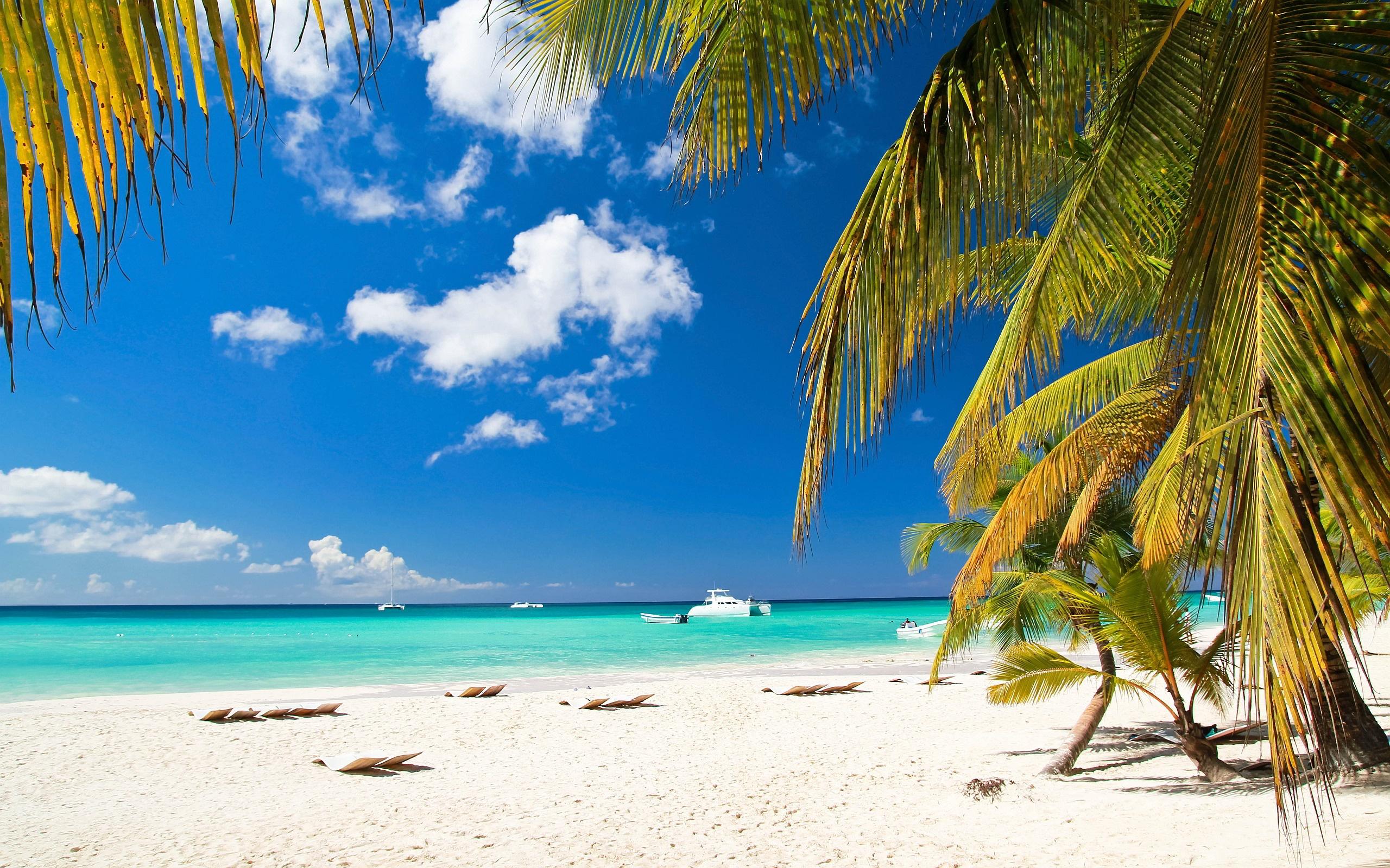 Beach Palms Ships Wallpaper in 2560x1600 Widescreen