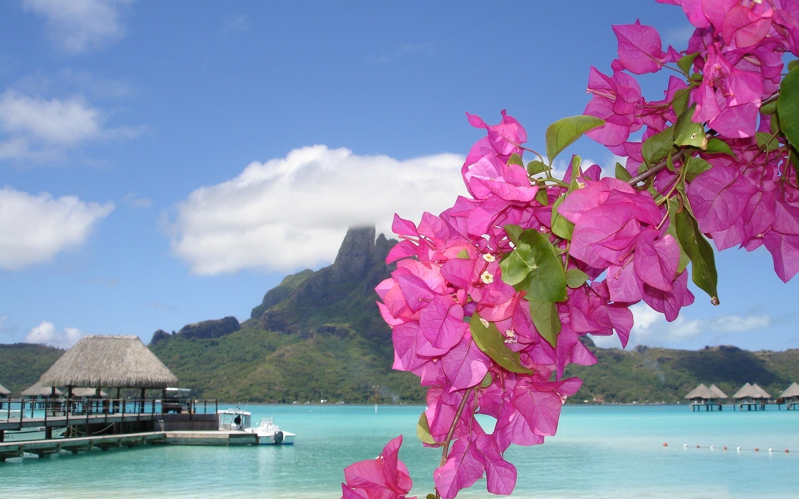 Beach Purple Flowers
