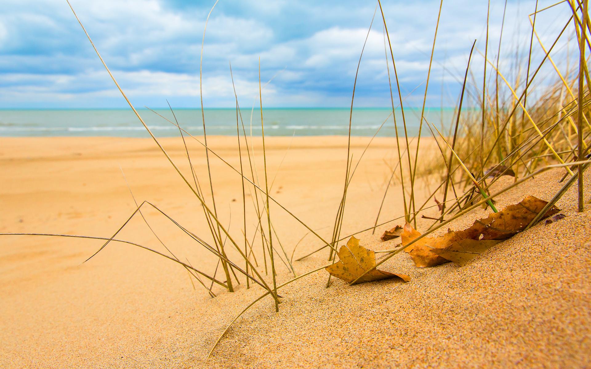 Beach sand grass sunshine