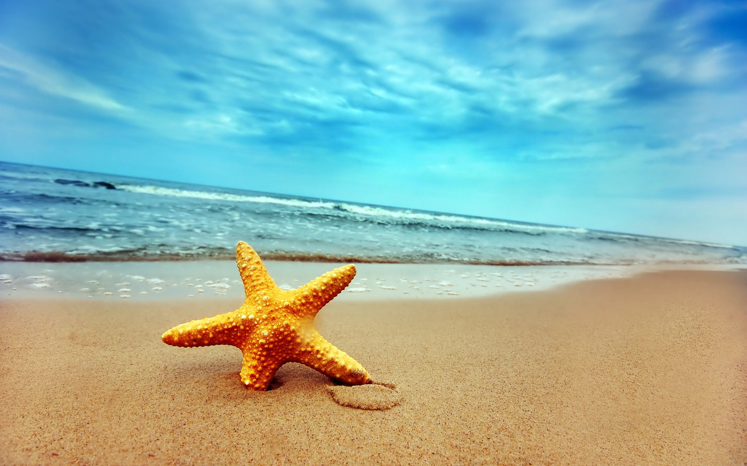 Starfish on Beach Sand (click to view)