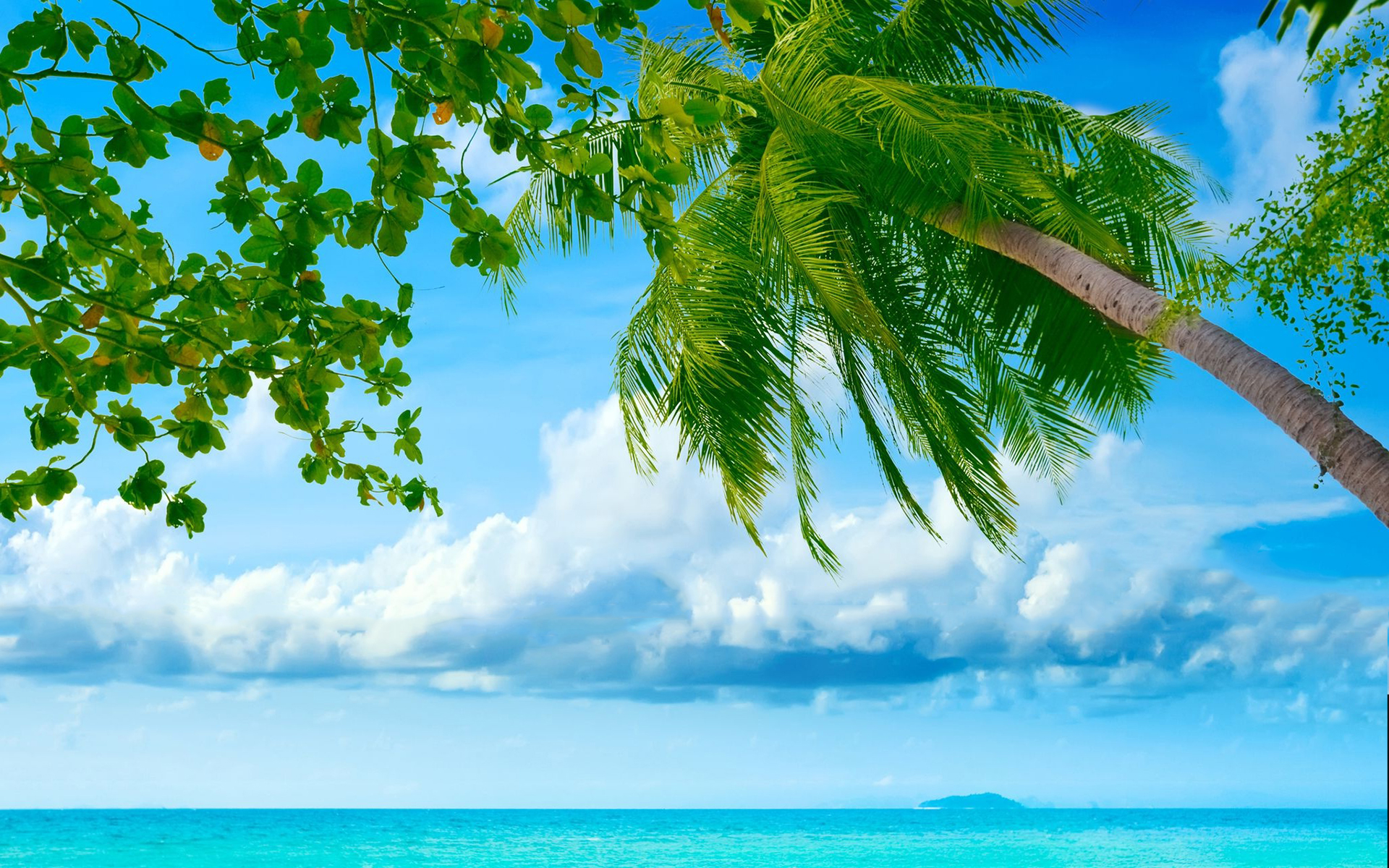 Beach sea palms hd