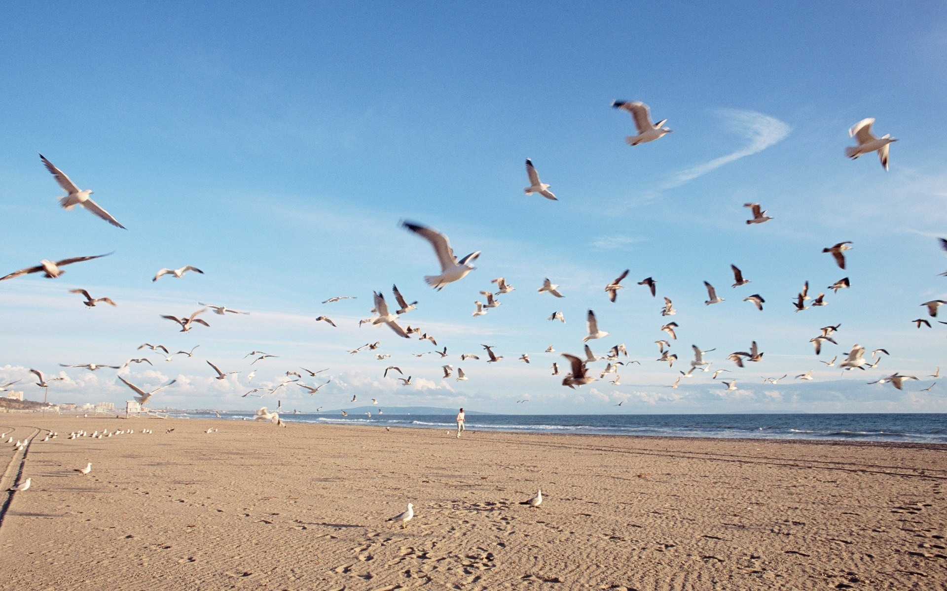 seagull flying wide hd cool wallpaper