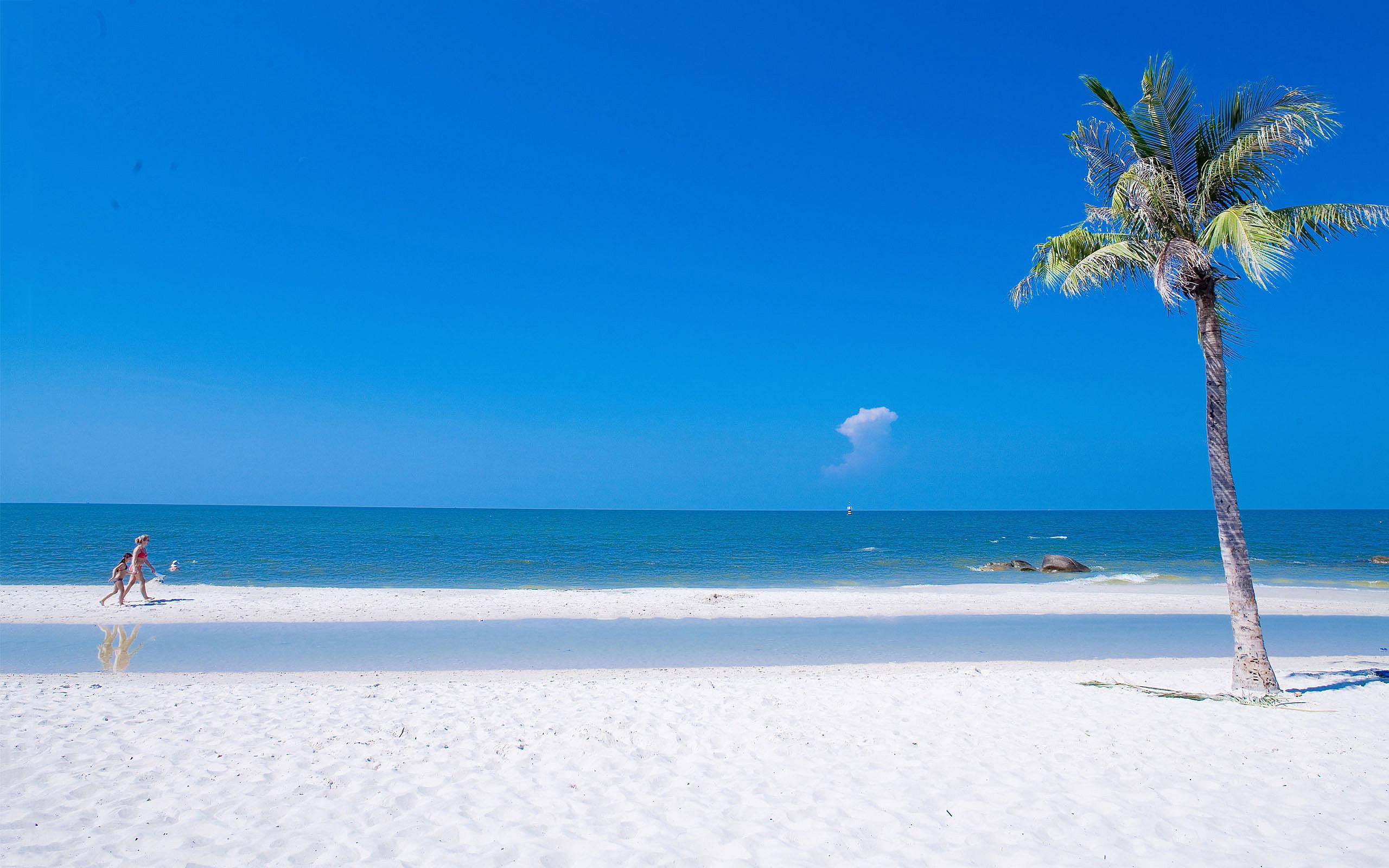 Beach Summer Ocean