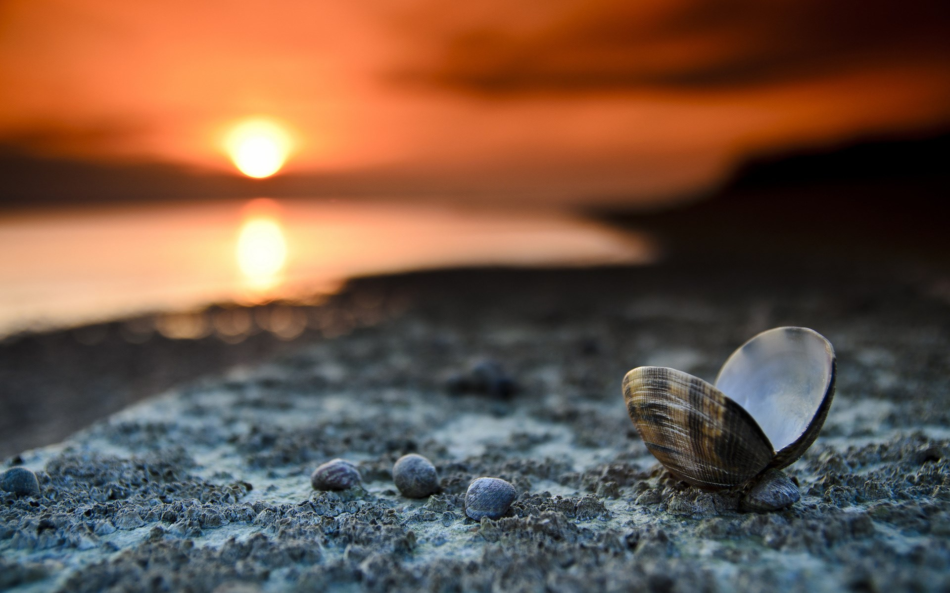 Beach Sunset Landscape Shells