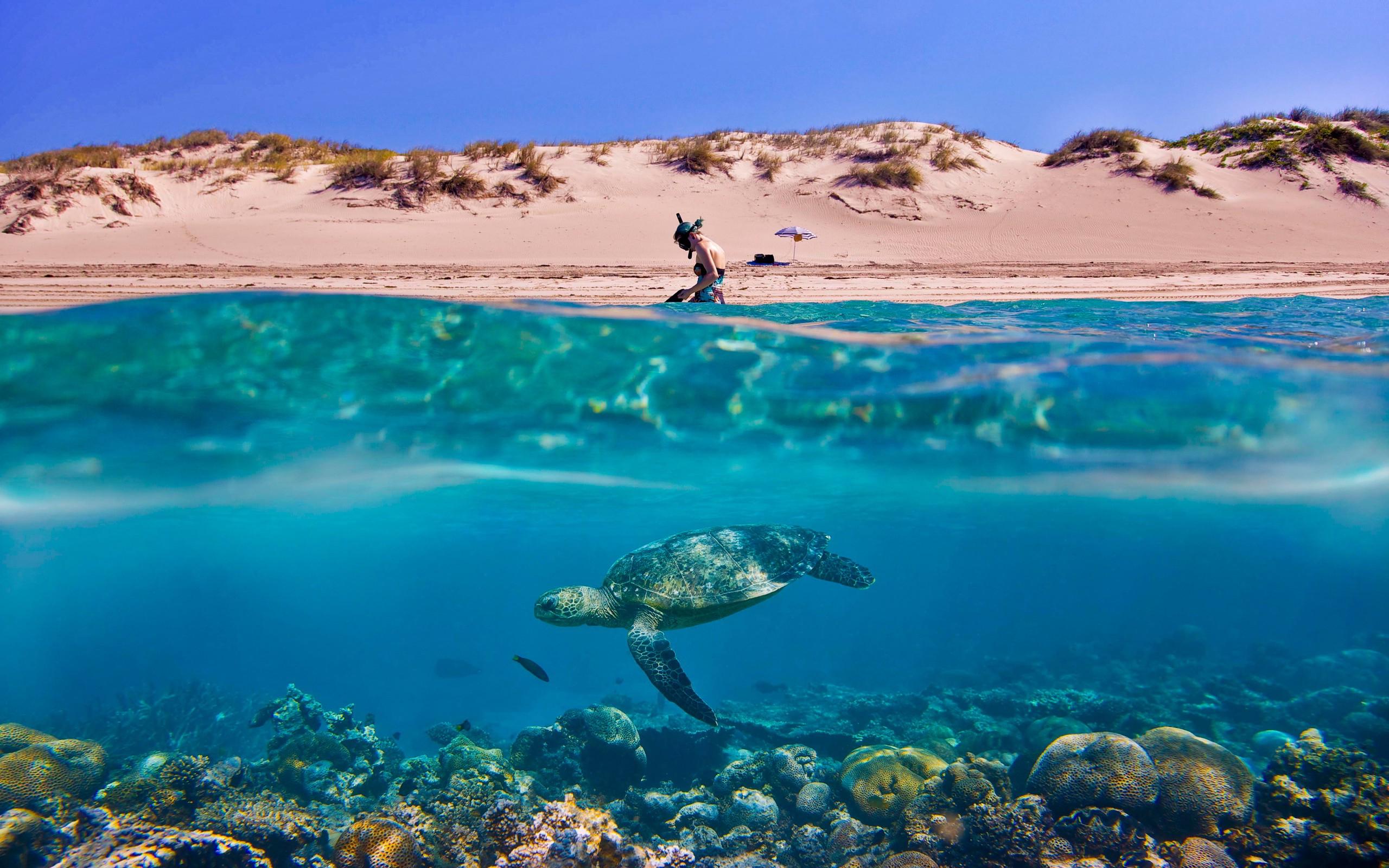 Turtle beach underwater