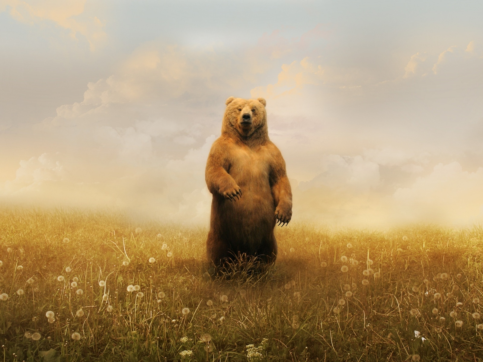 Bear Standing Wallpaper in 1600x1200 Normal