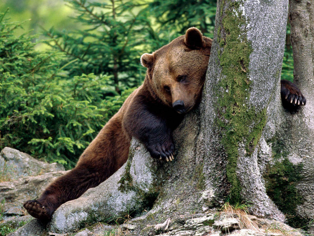 cute bear animal wallpapers cool bear background images widescreen