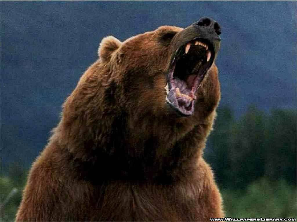 Animals Grizzly Bears