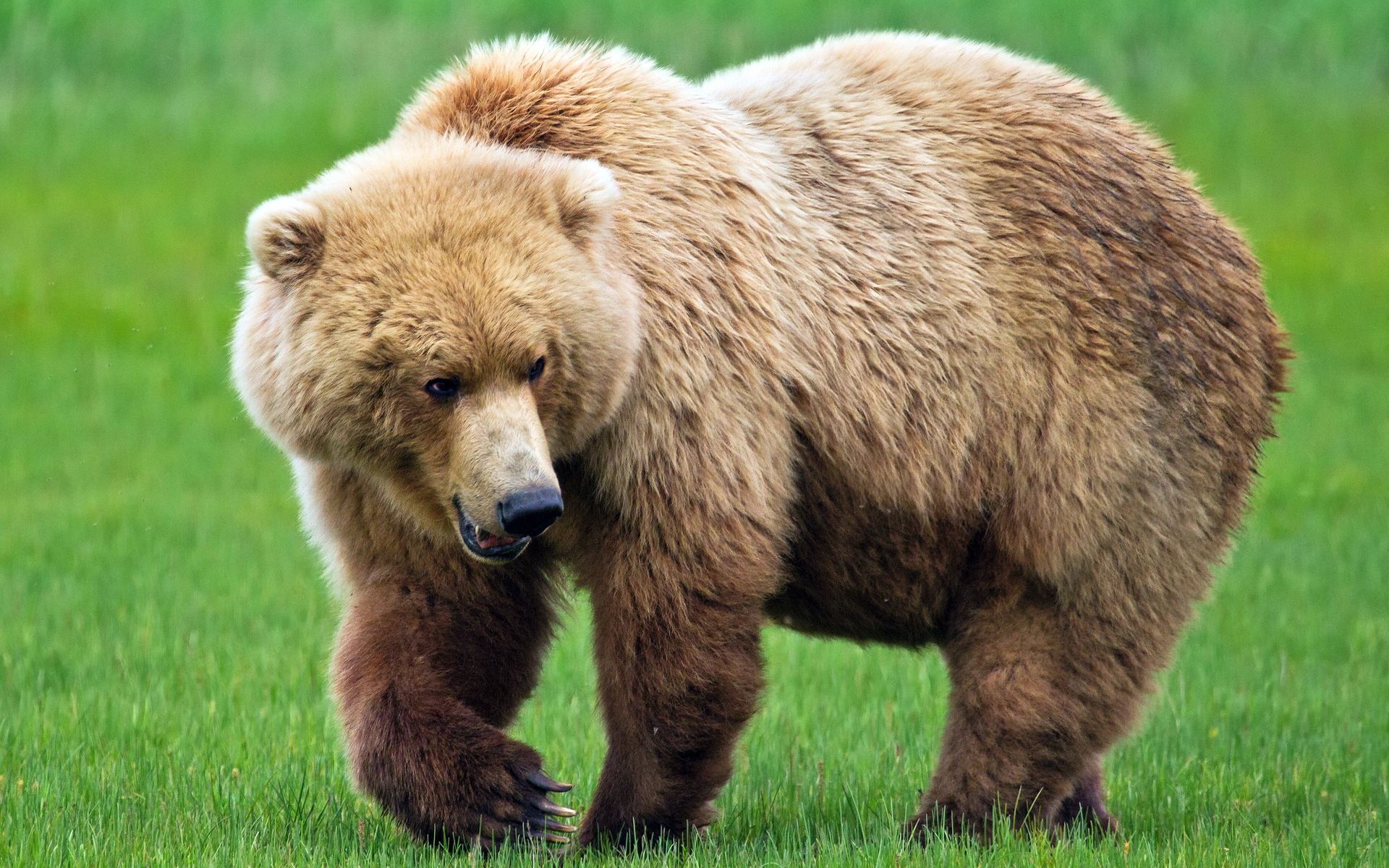 Bear- Photo#01