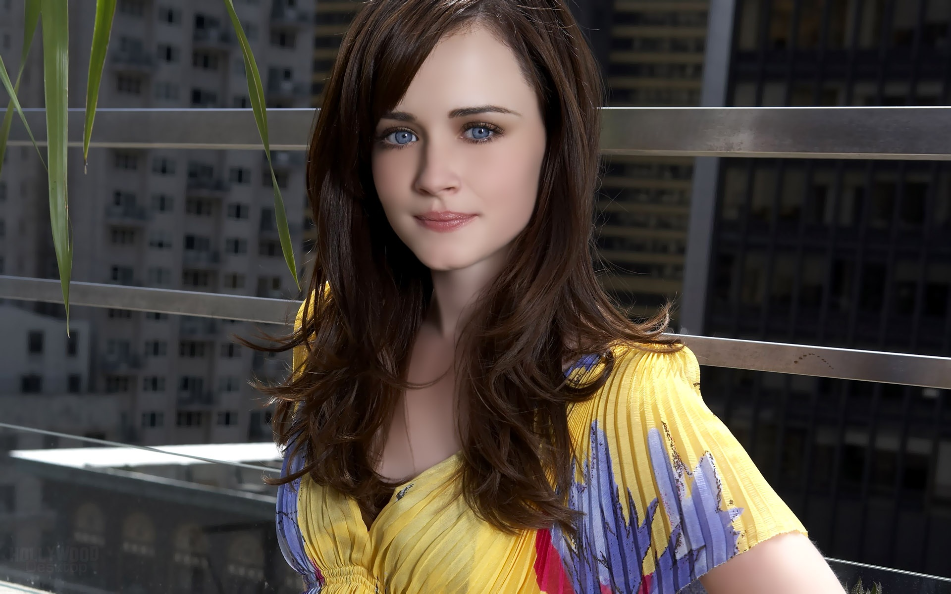 alexis bledel beautiful face hd wallpaper