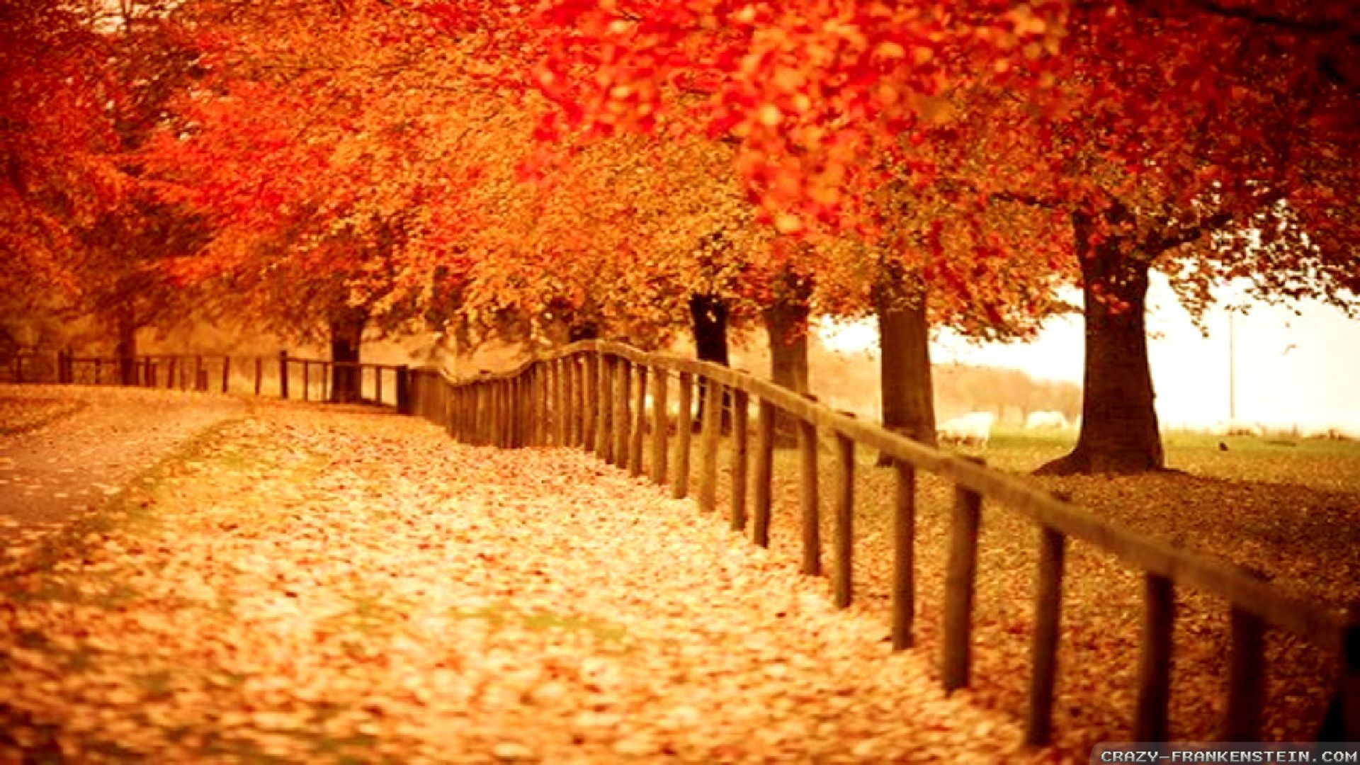 Beautiful Autumn Photos Widescreen 2 HD Wallpapers