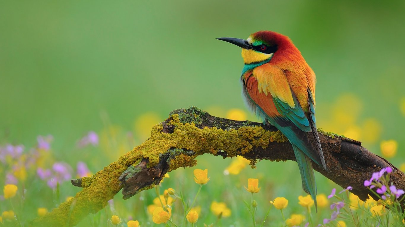 Beautiful Bird ...