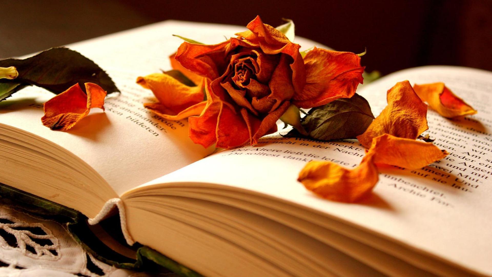Beautiful Book Wallpaper