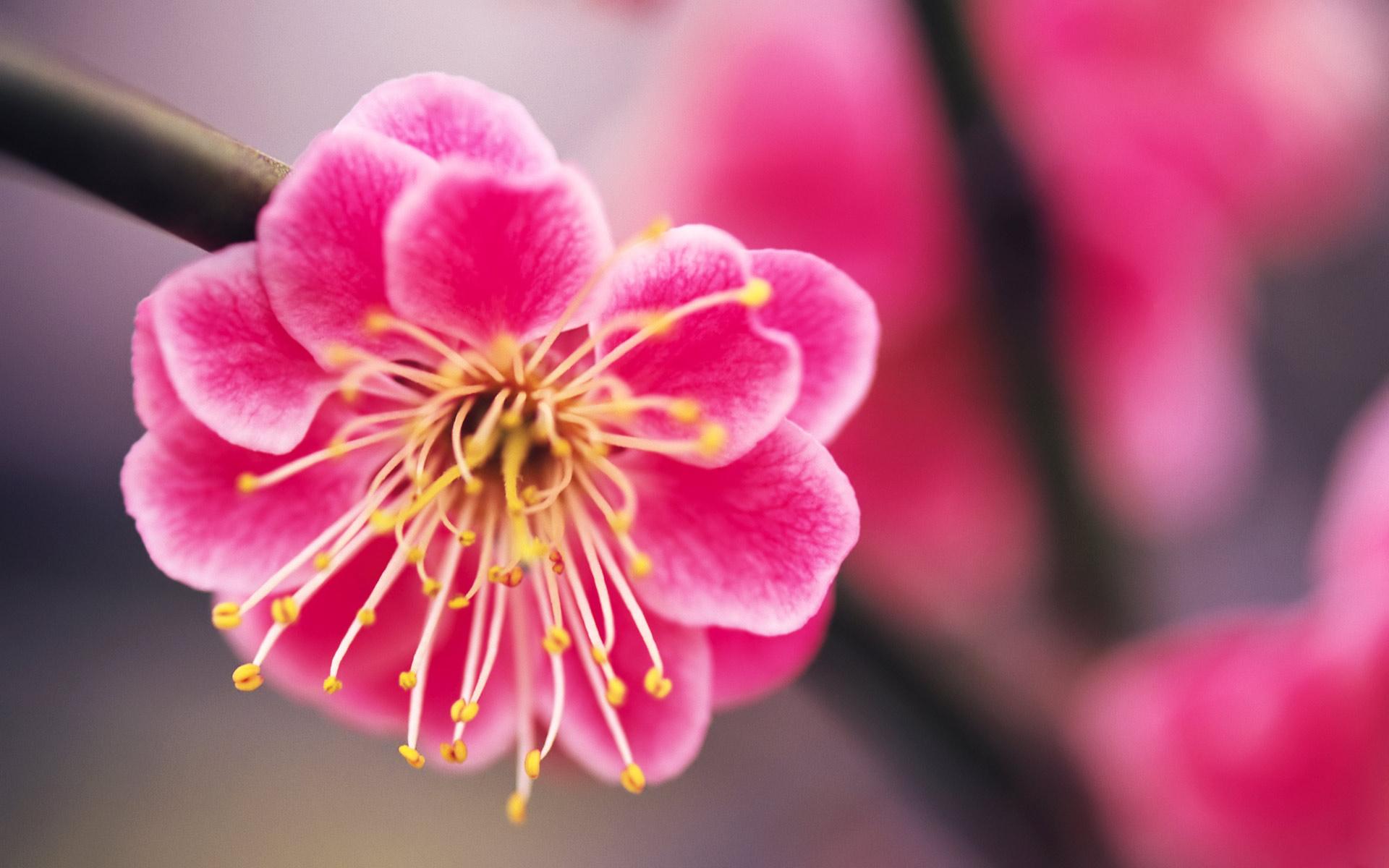 Beautiful Bright Pink Flowers