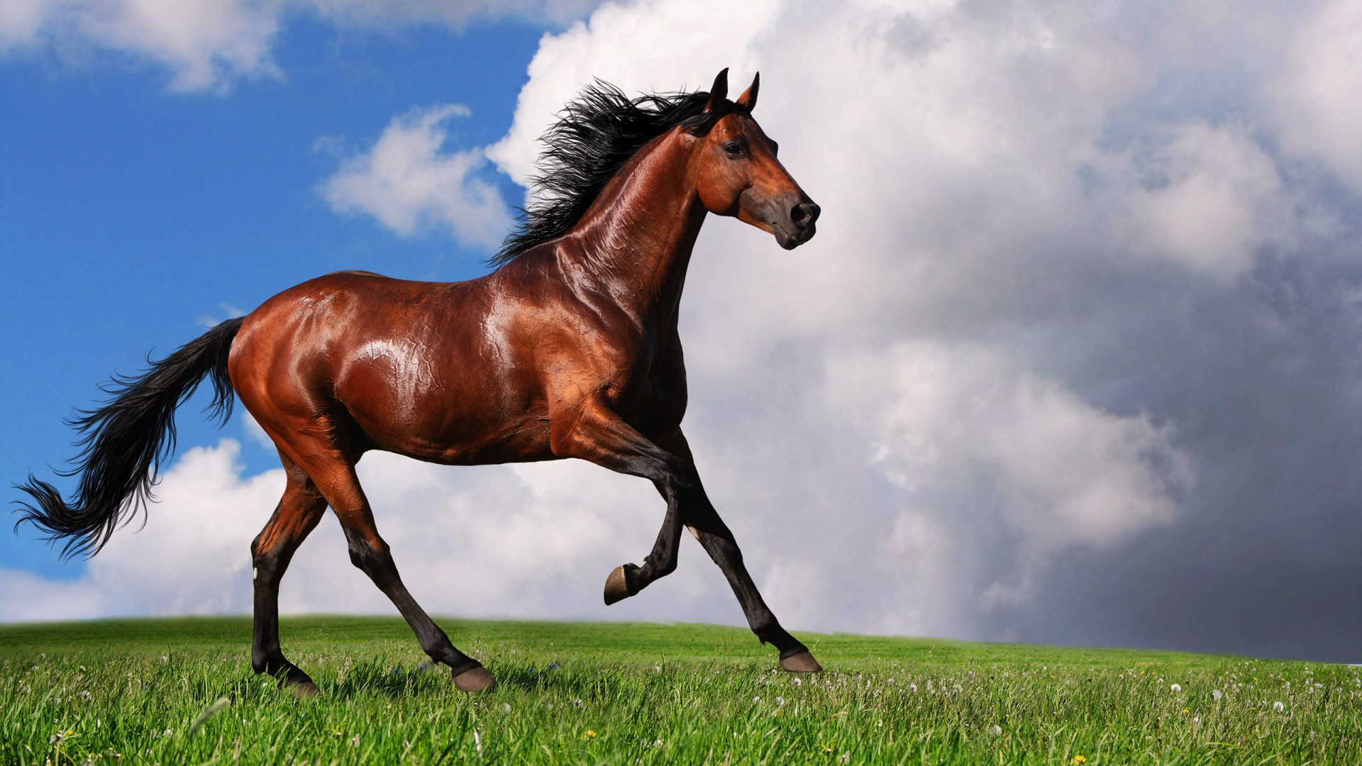 Beautiful brown Horse