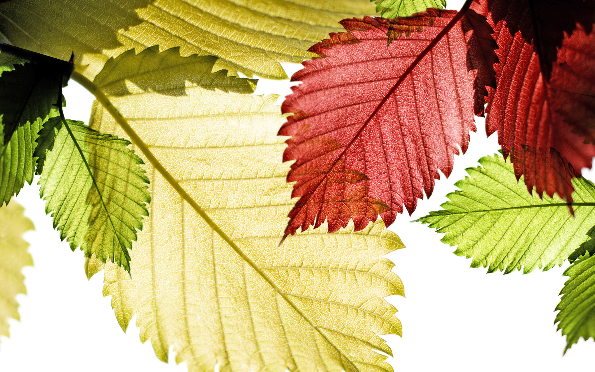 Beautiful Colorful Leaves HD wallpapers