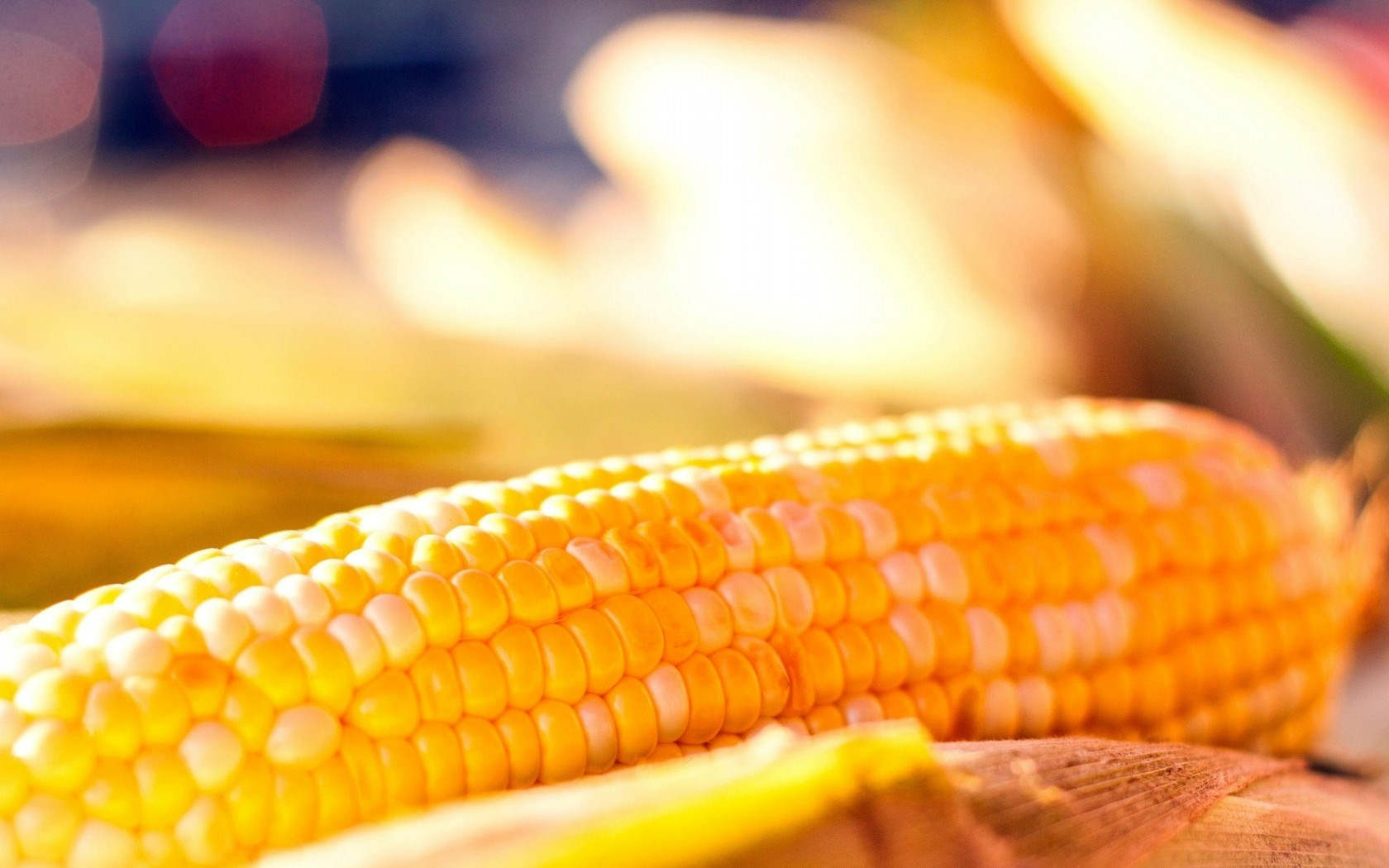 Beautiful Corn Background