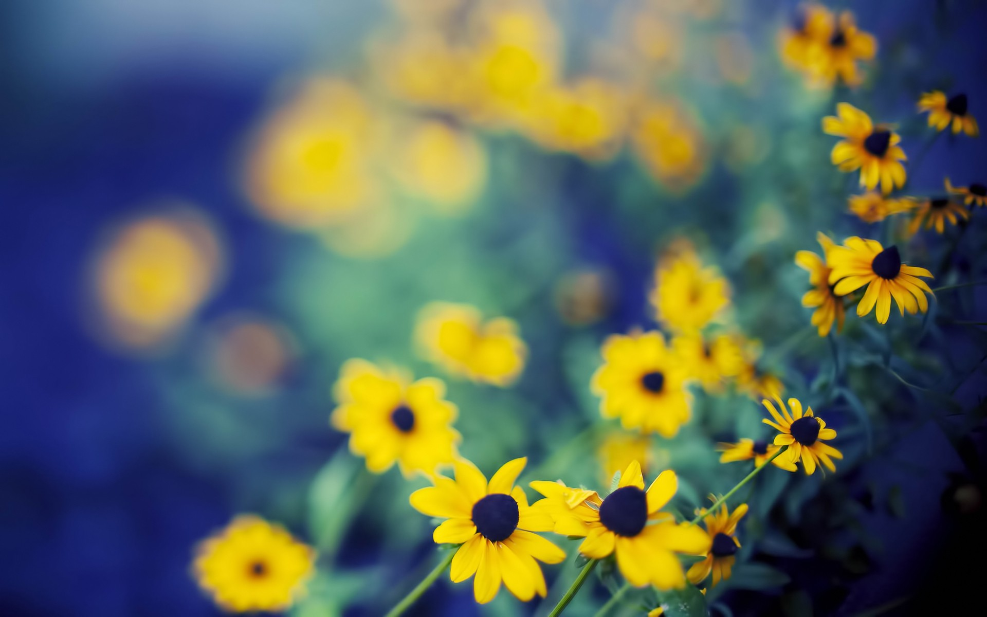 Beautiful Depth of Field Wallpaper