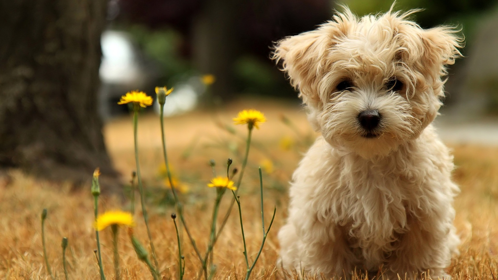 Cute Dog Wallpaper