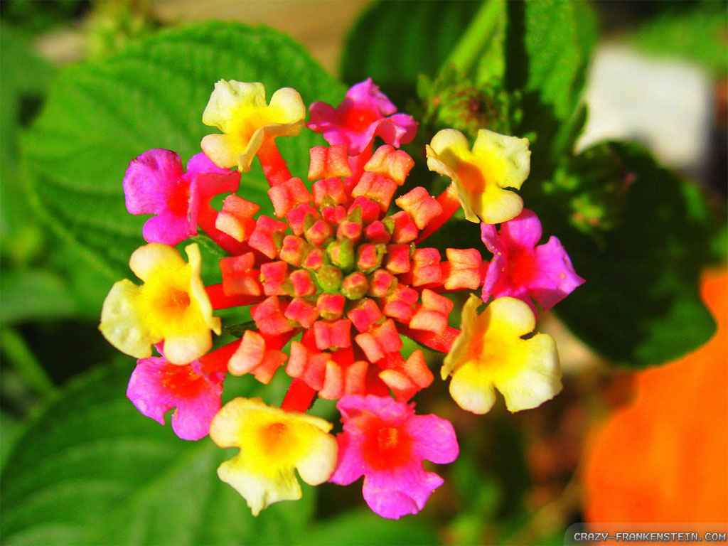 Beautiful Exotic Flowers Wallpaper