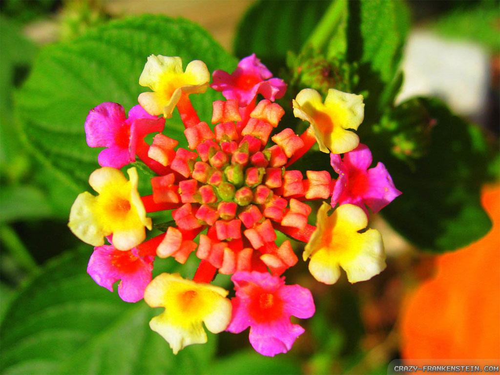 Beautiful Exotic Flowers Wallpaper