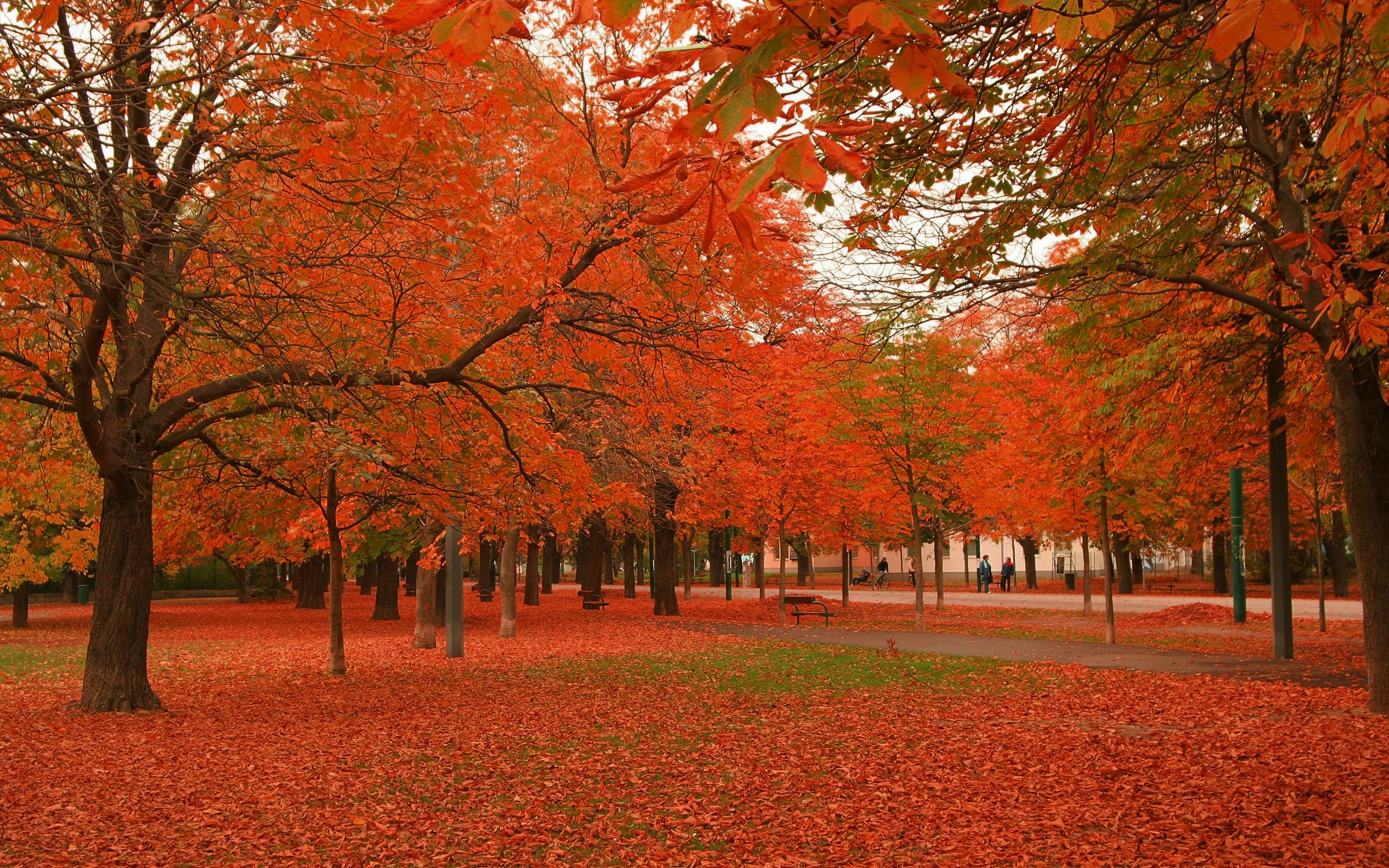 Beautiful Autumn Trees | 2560 x 1600 ...