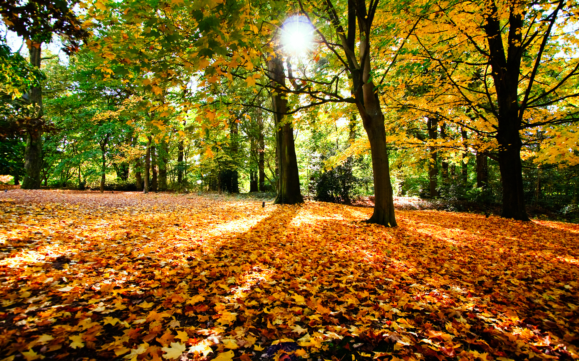 Beautiful Fallen Leaves Wallpaper