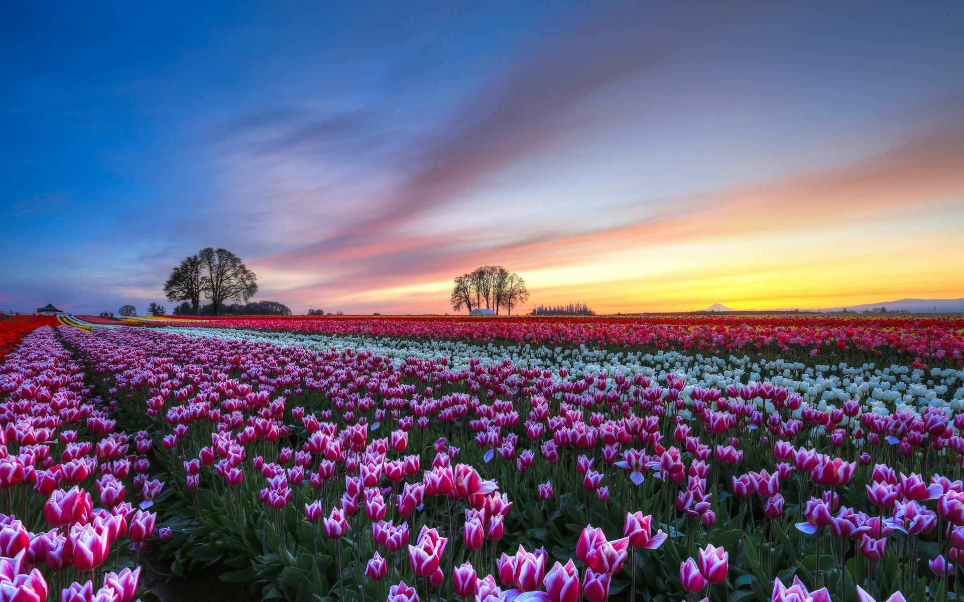 Beautiful Flower Field Background