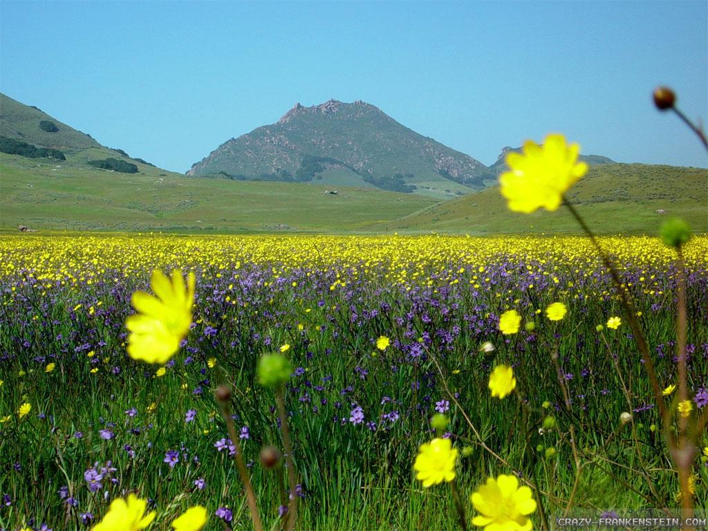 Wallpaper: Beautiful flower field wallpapers
