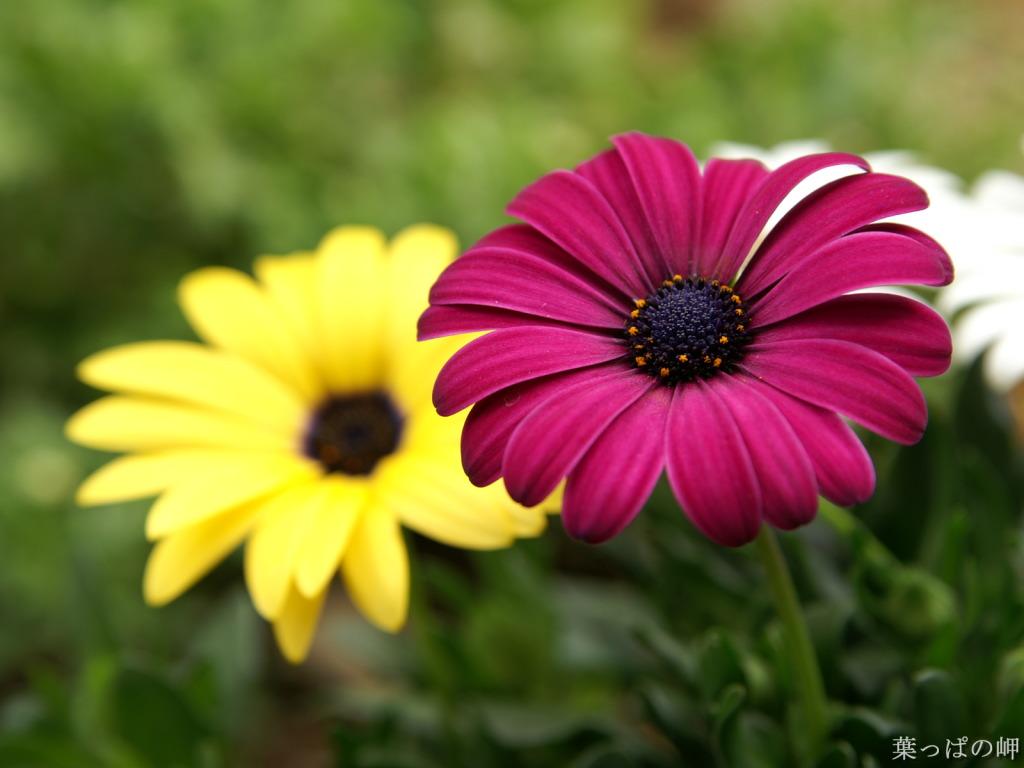 Beautiful Flower Images Hd Desktop 10 Thumb