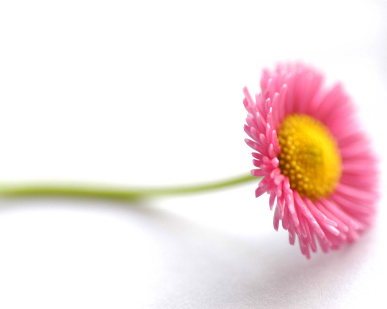 Beautiful Flower Pictures