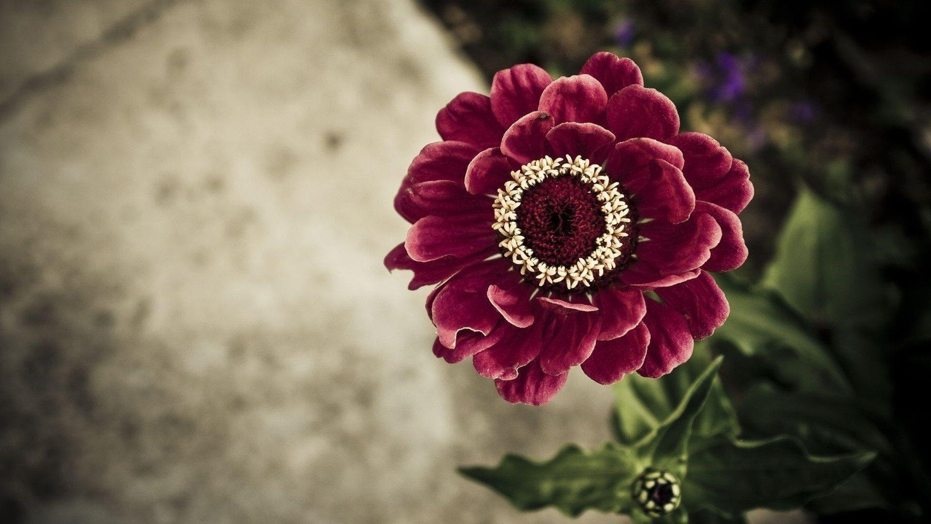 ... Beautiful flower 19 ...