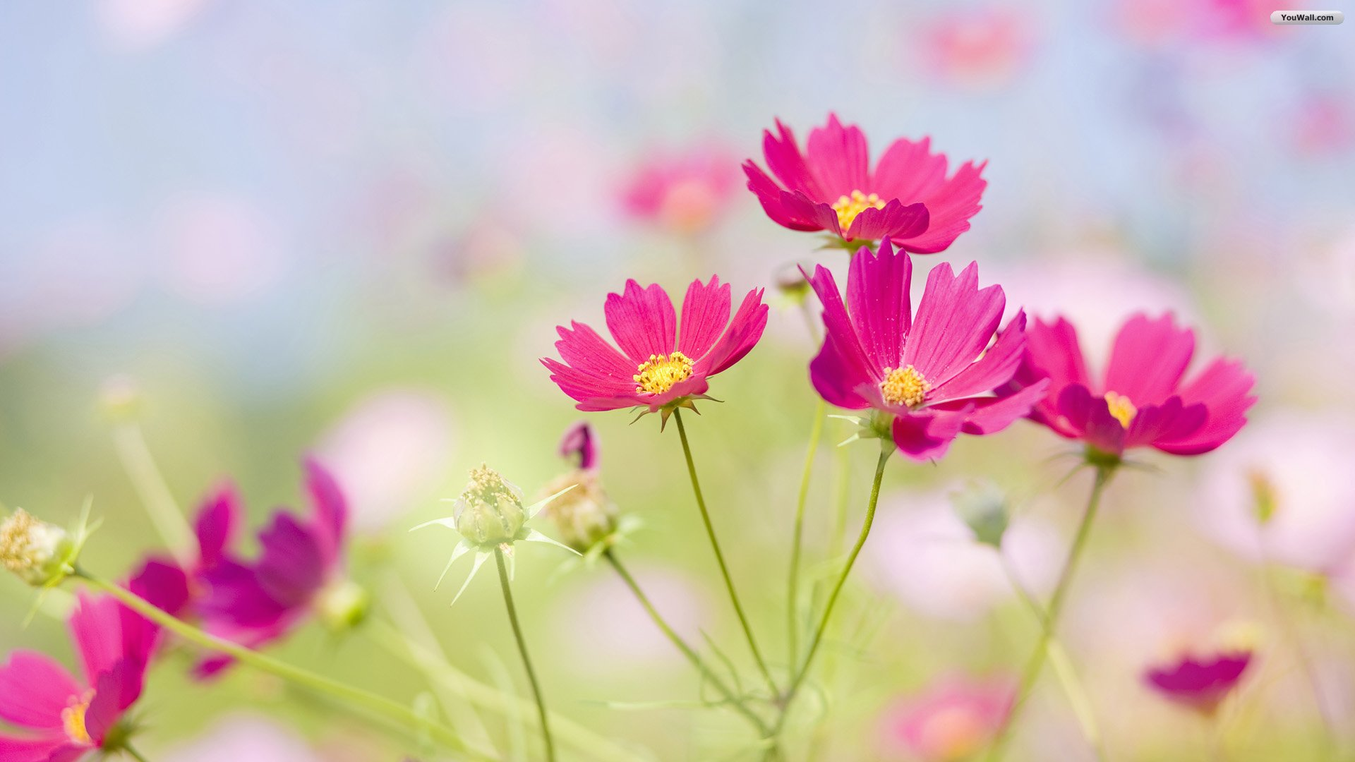 Beautiful Flower Images Background 1