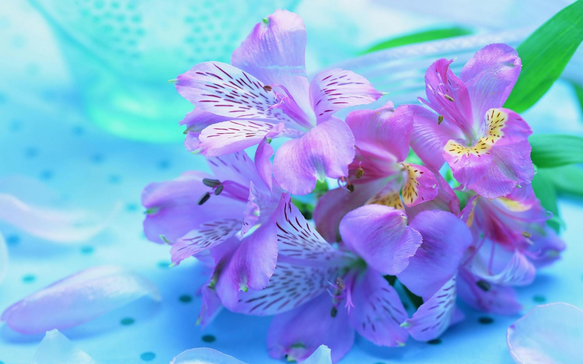 Beautiful Flower Images Hd Background Wallpaper 21 Thumb