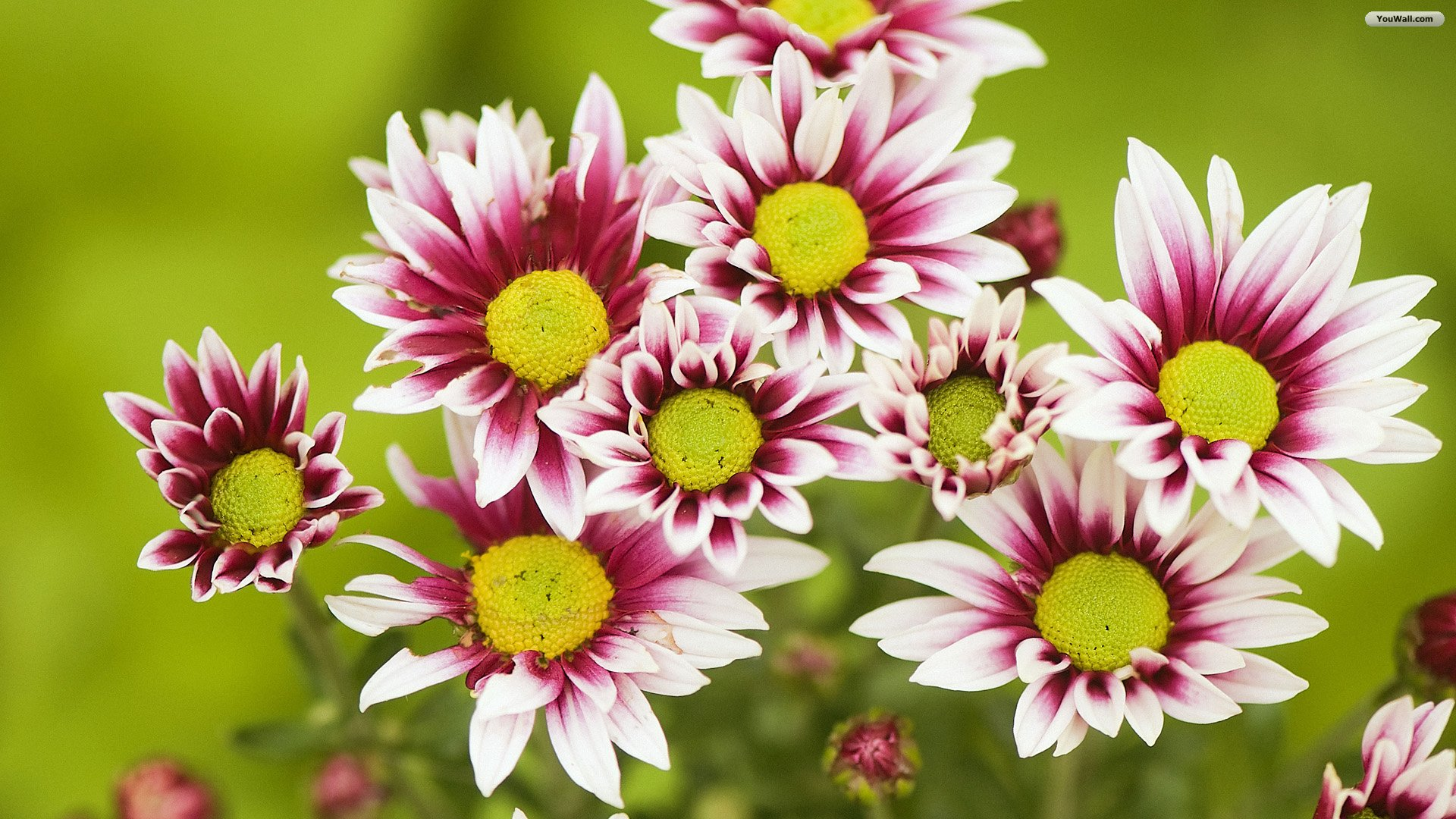 Beautiful Flowers Hd Widescreen 11 Thumb