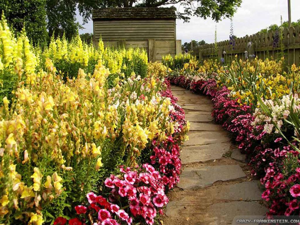 Beautiful Flowers Road Photo