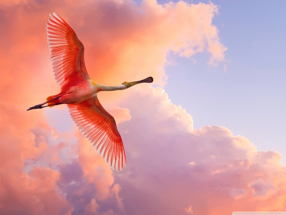 Beautiful Flying Wallpaper