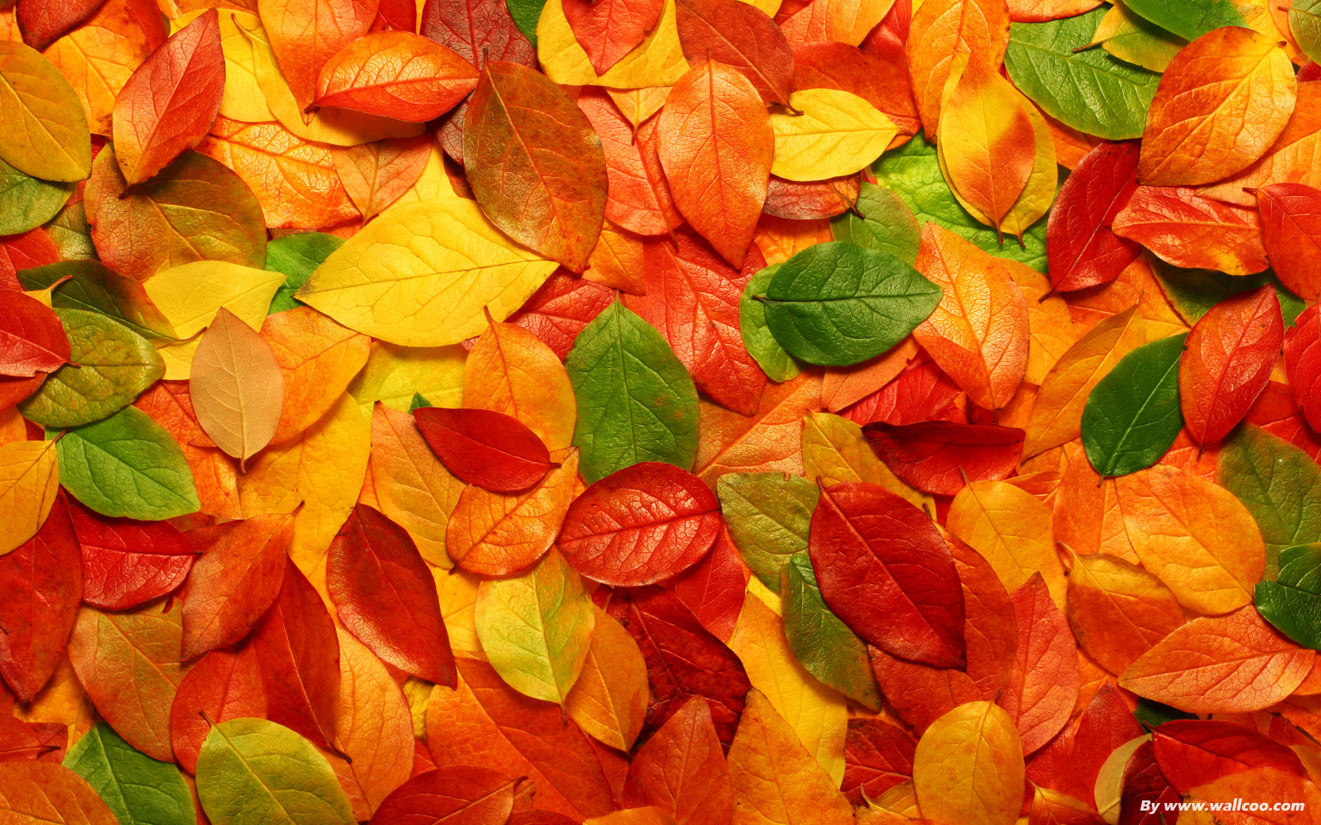 Wallpapers Red Leaf Beautiful Wallpapers Red Leaf Beautiful Leaves Nature 1920x1200