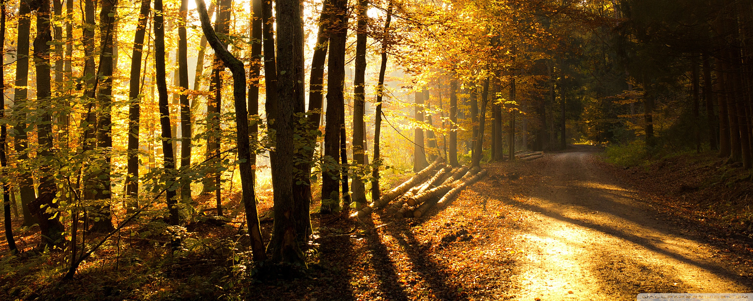 Beautiful Forest Road Wallpaper 2560x1024 34946