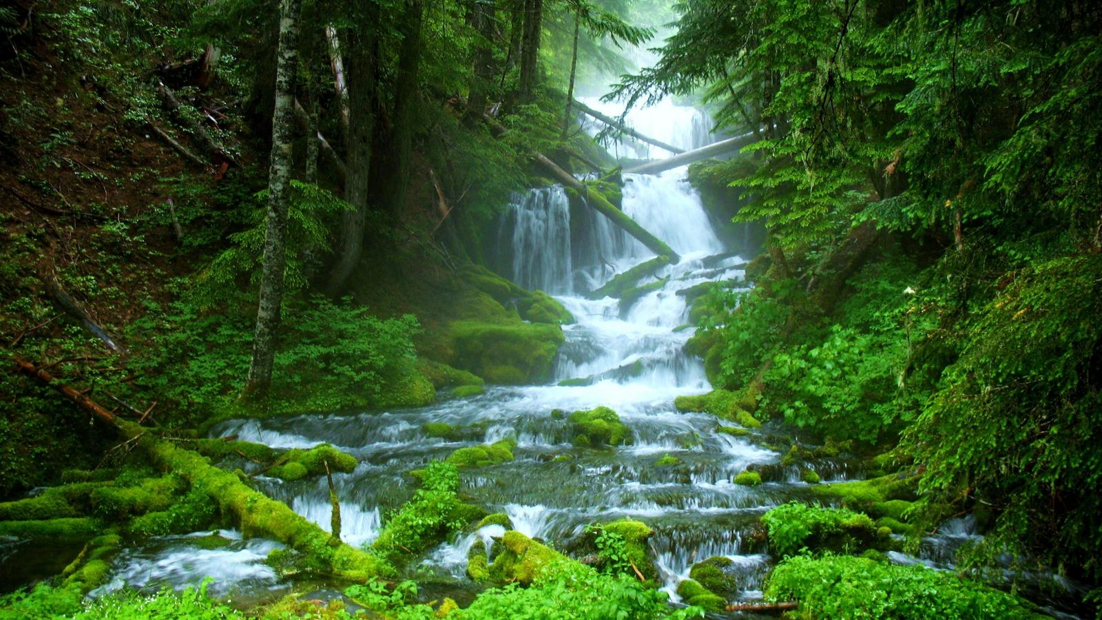 beautiful forest waterfall wallpaper | 1600x900 | #29334