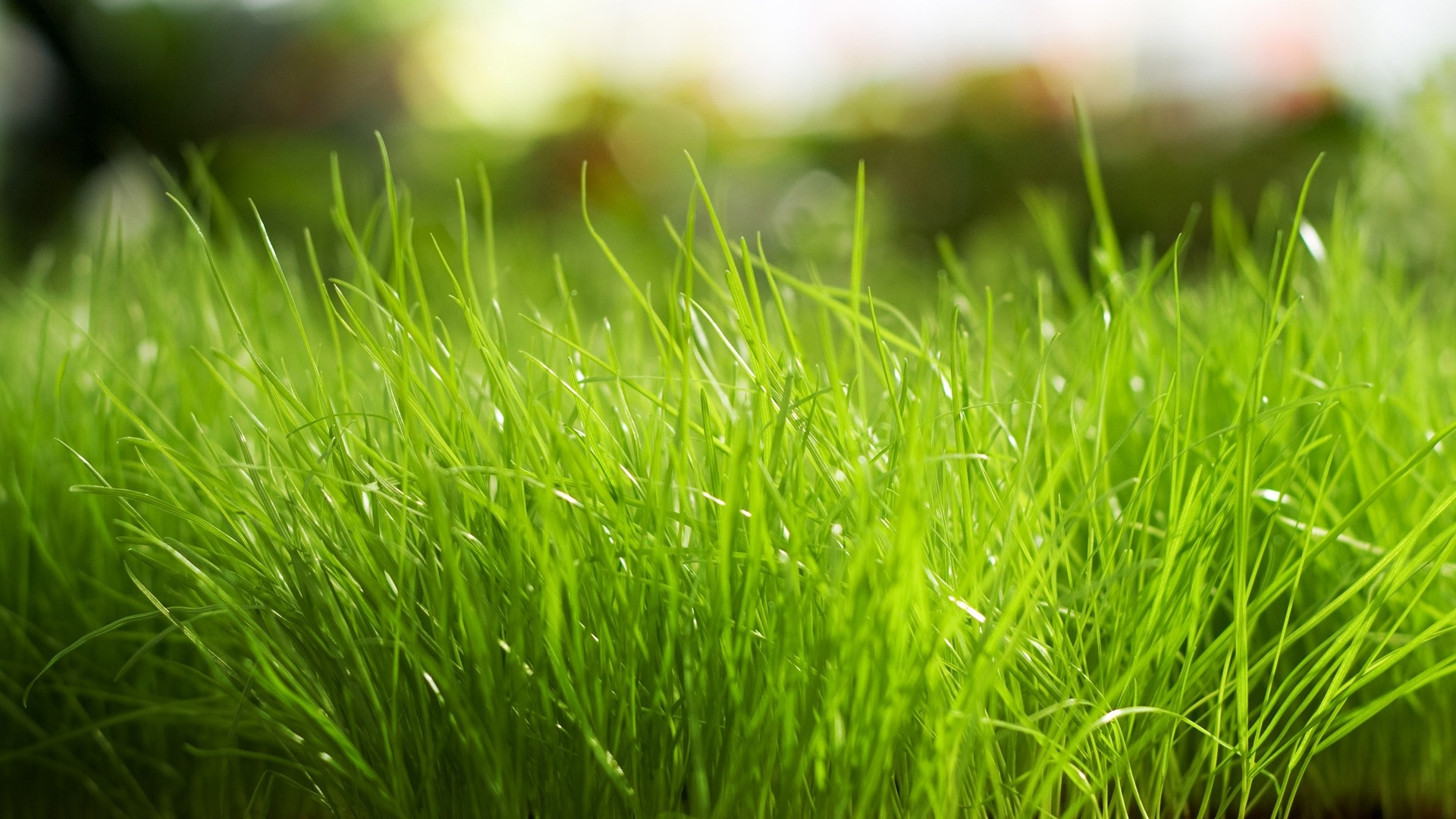 Beautiful Grass Background