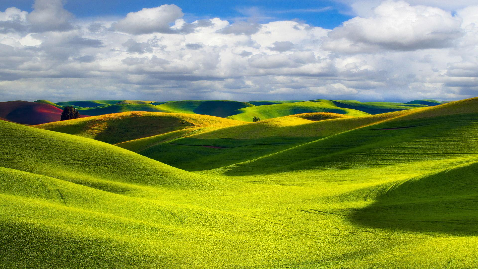 Beautiful Grassland Scenery Widescreen Wallpaper